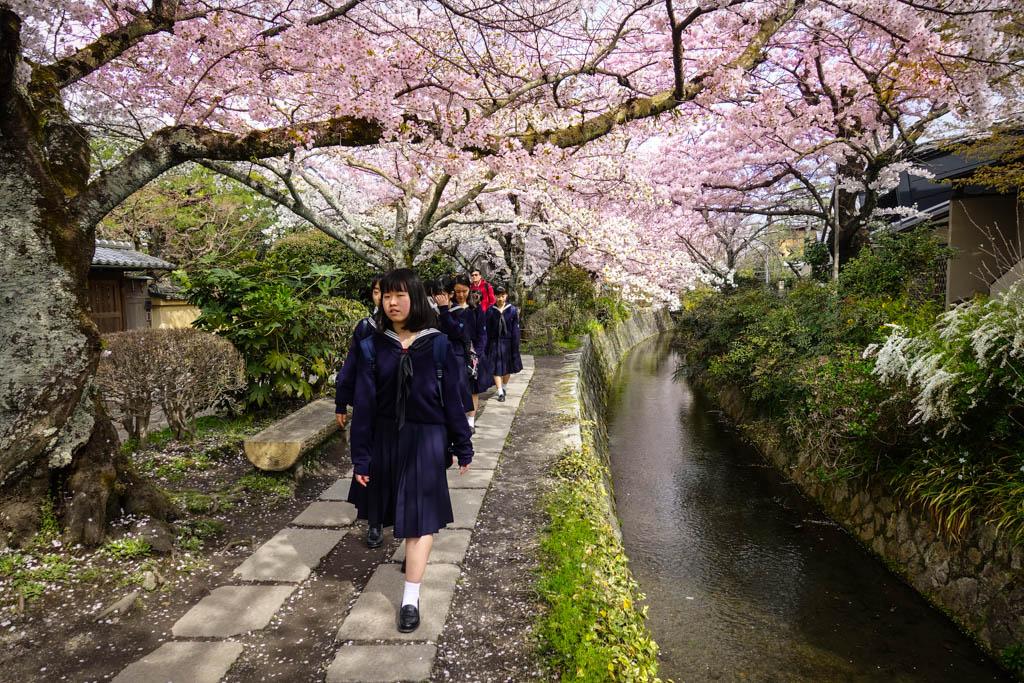 Сакура в Киото: вот она!